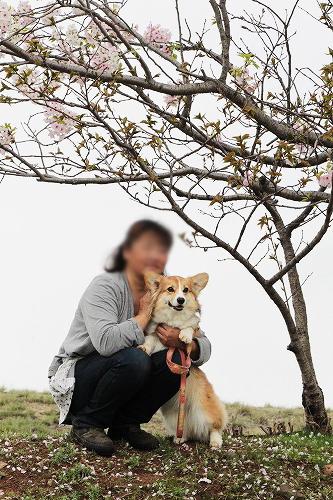 桜と沙羅ちゃん