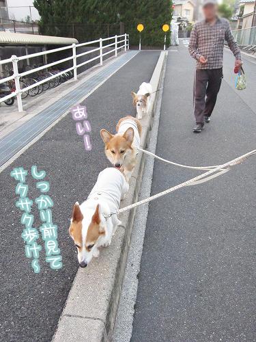 サクサク歩け~