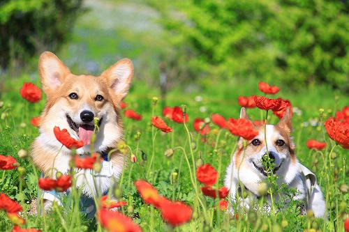 花とろんれんたん3