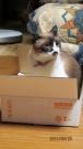 たーちゃんも箱が好き