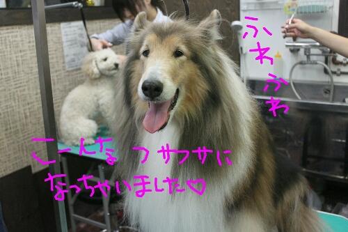 b0130018_152548172014-12-31犬濯