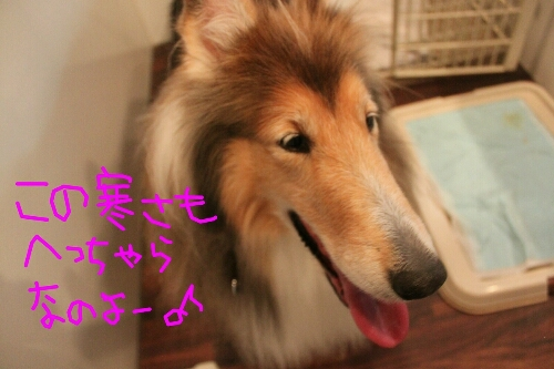 b0130018_152631412014-12-31犬犬