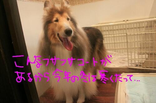 b0130018_15265302014-12-31.jpg
