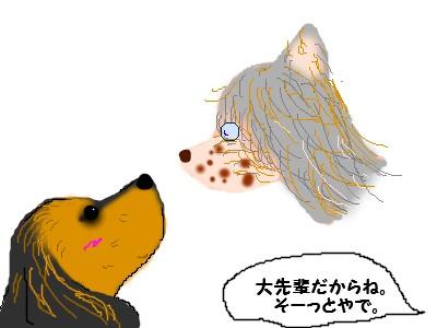 ヨーキーちゃん