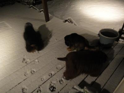 お正月の初雪