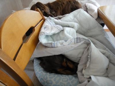 大人気ベッド