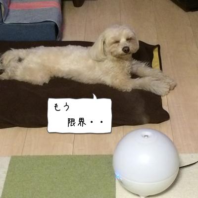眠気MAX