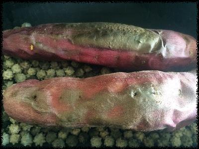 焼き芋やけた