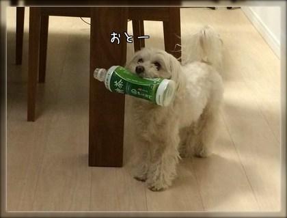 ペットボトル①