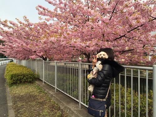 桜とらっくん①