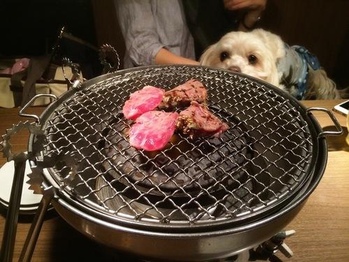 焼き肉見つめます