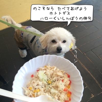 俳句ハロー