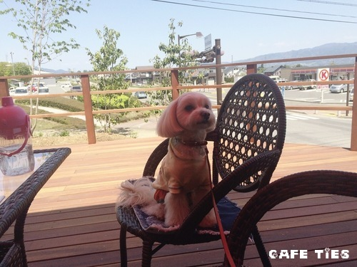 cafe ties テラス