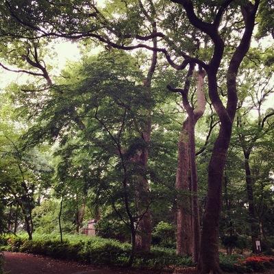 りんしの森公園②