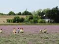 150511 レンゲ畑 (53)