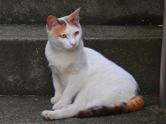 美猫ネコラ