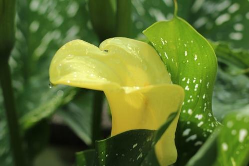 梅雨のカラー
