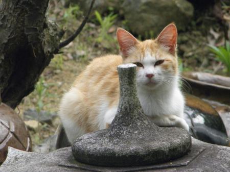 030_convert_20150528195209うたたね猫2