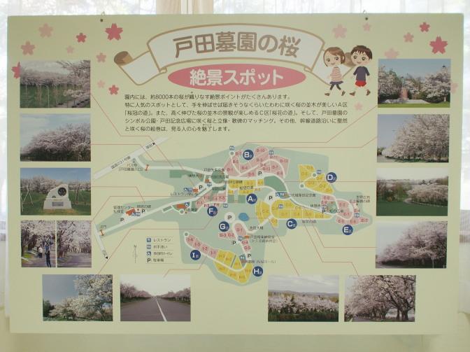 戸田記念墓地公園内桜の絶景スポット