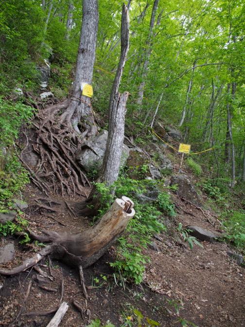 木の根が張った急坂