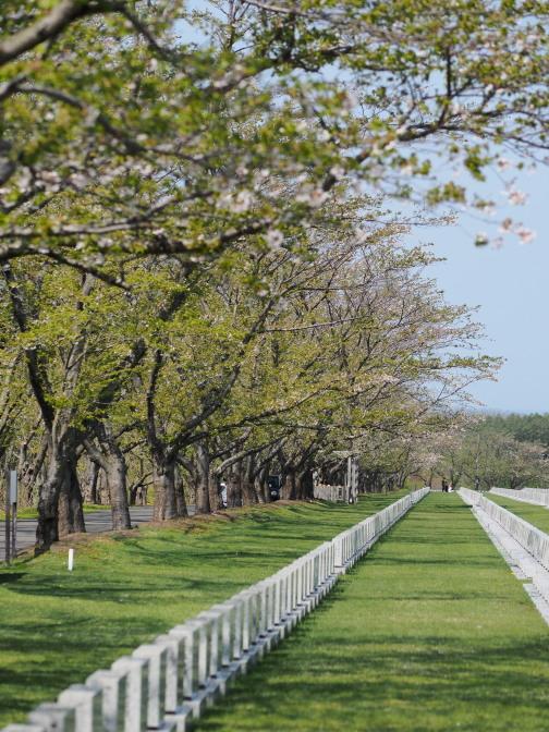 桜花の道も葉桜