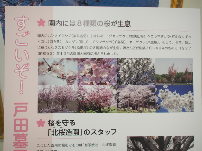 戸田墓園に咲くの桜の種類