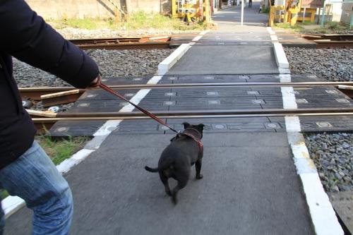 2月の鎌倉散歩3