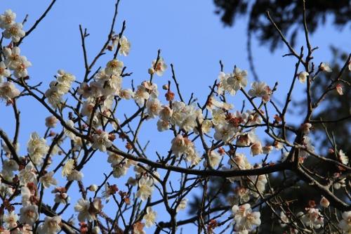 2月の鎌倉散歩15