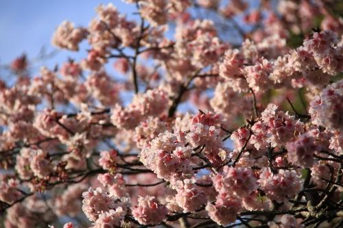 2月の鎌倉散歩16
