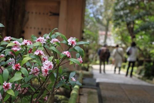 鎌倉小旅行13
