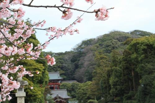 鎌倉小旅行19