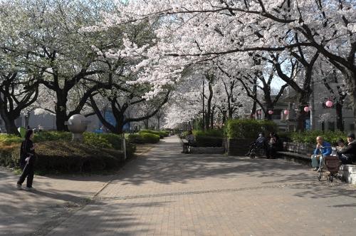 2015お花見散歩3