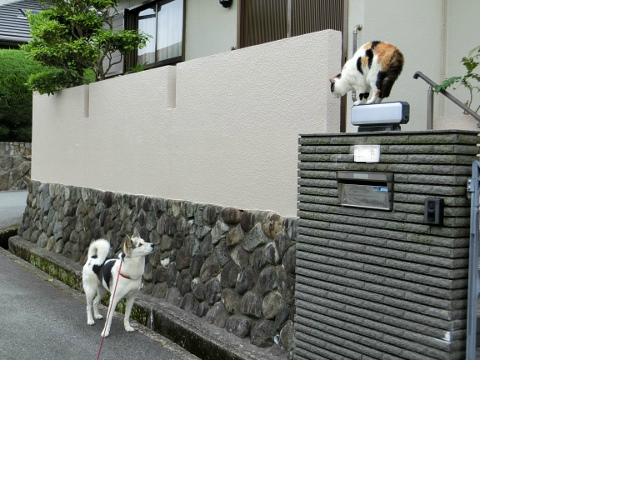 snap_sakuranbo32_201561131048.jpg
