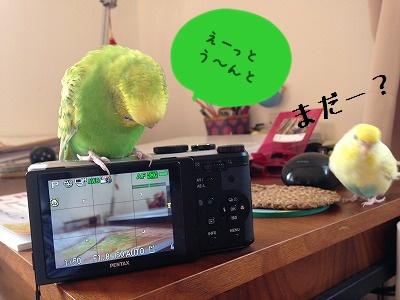 s-IMG_9473.jpg