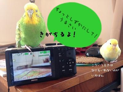 s-IMG_9474.jpg