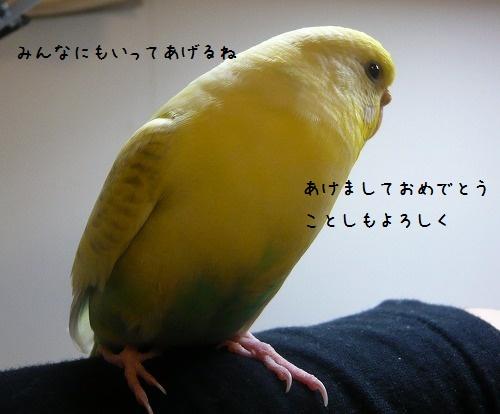 s-P1310105.jpg