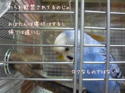 s-P1310417.jpg