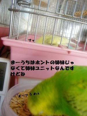s-P1310592.jpg