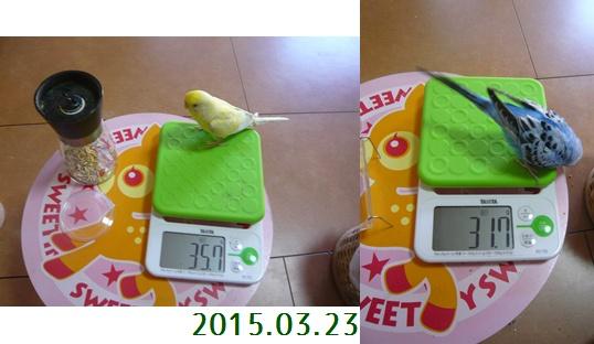 taizyu_20150323.jpg