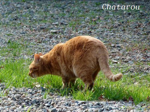 chichibi270.jpg