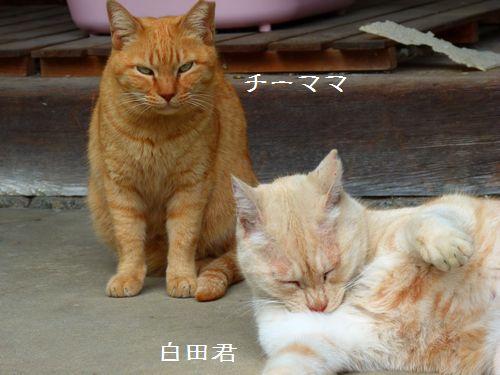 chichibi44_20150318141440596.jpg