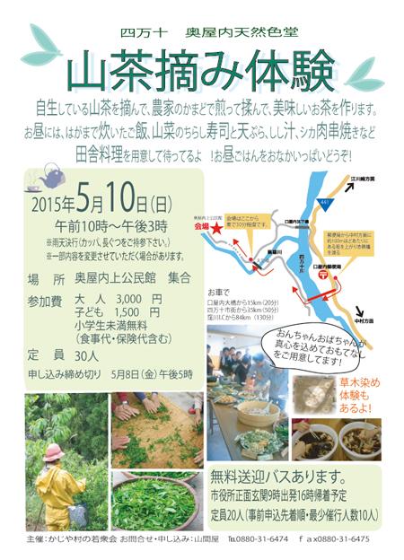 山茶摘み体験2015