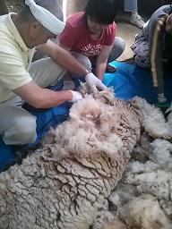 毛刈りー5