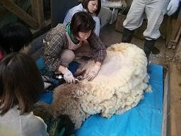 毛刈りー6