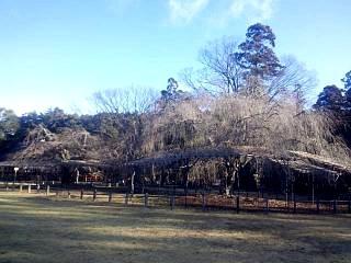 20141226上賀茂神社(その2)