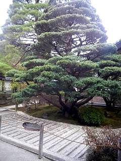20141227銀閣寺(その3)