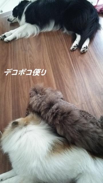 20150726 抱っこ4
