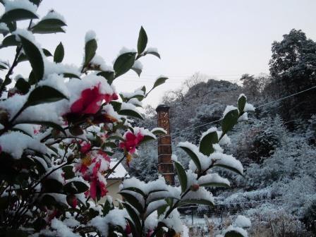 雪の朝1(2014-12-17)