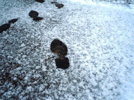 雪の朝3(2014-12-17)