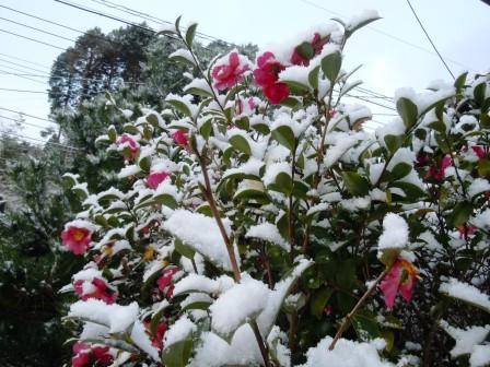 雪の朝4(2014-12-17)